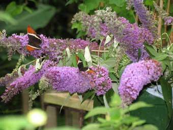 Un jardín botánico en Hormilla